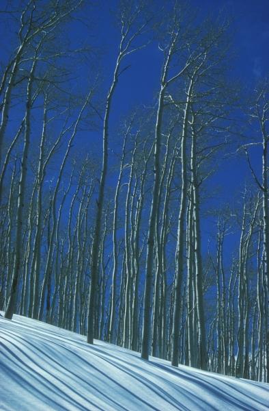 Aspen Lines, La Sal Mountains Utah (2) AV