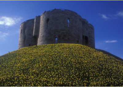 Clifford Tower & Daffodils, York AV
